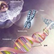Пренатальная диагностика наследственных и врожденных болезней фото