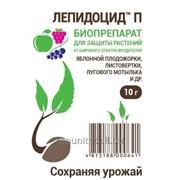 Лепидоцид — новый высокоэффективный биологический инсектицид. фото