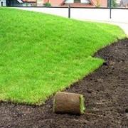 Трава газонная в рулонах фото