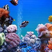 Продажа аквариумов фото