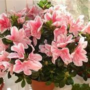 Комнатные растения и цветы фото
