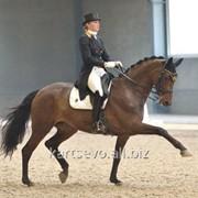 Лошади для спорта фото