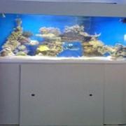 Морской аквариум с живыми камнями фото