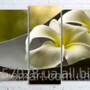 Модульна картина на полотні Біла квітка в чаші код КМ100200(176)-101 фото
