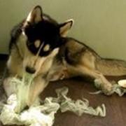 Дрессировка и коррекция поведения собак в Харькове фото