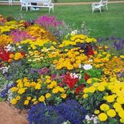 Создание цветников фото
