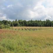 Земельный участок у озера Але фото