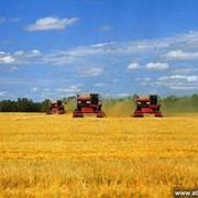 Бухгалтерский учет сельскохозяйственного предприятия фото