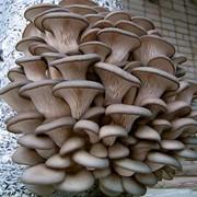 ОБУЧЕНИЕ технологии выращивания грибов фото