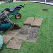 Укладка рулонного газона. фото