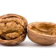 Орехи грецкие, грецкий орех куплю, грецкий орех цена, продам грецкий орех, ядро грецкого ореха, грецкий орех продажа, грецкий орех фото, грецкий орех оптом, покупка грецкого ореха, куплю орех грецкий украина фото