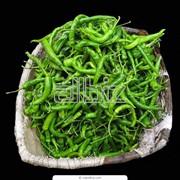 Перец зеленый фото