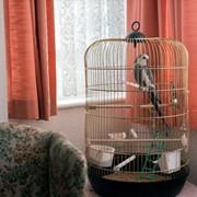 Гостиница для птиц (передержка)в Харькове фото