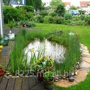 Пруды садовые фото