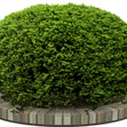 Стилевые сады. фото