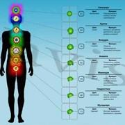 Компьютерная диагностика «Альфа» фото