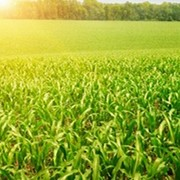 Препарат для предпосевной обработки семян Витакс фото