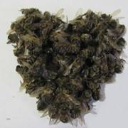 Підмор бджіл 20 г (тільця бджіл), бджолиний підмор фото