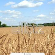 Сельхозпродукция фото