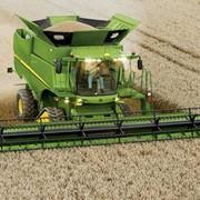 Збирання урожаю зернозбиральними комбайнами Джон Дир фото