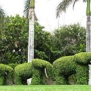 Проекты улучшения садово-парковых объектов фото
