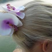 Крабики с орхидеями фото