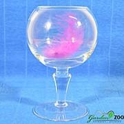 Ваза-кубок Федерер средняя 1824 фото