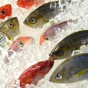 Рыба морская мороженая разные виды в ассортименте возможен экспорт фото
