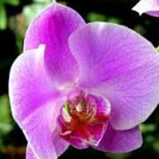 Орхидеи декоративные фото
