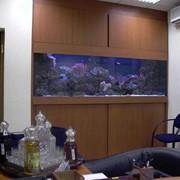 Аквариум псевдо-море фото