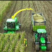 Услуга по уборке кукурузы импортными комбайнами фото