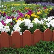 Оформление цветников. фото