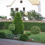 Озеленение территории фото