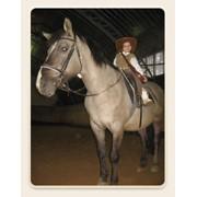 Индивидуальные и групповые занятия катания на лошадях фото