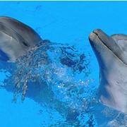 Шоу с черноморскими дельфинами фото