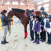 Навыки верховой езды. Катание на лошадях, Иппотерапия. Общение с животными. Рекреация и реабилитация вызванная стрессами и пассивным образом жизни. Повышение самооценки. фото